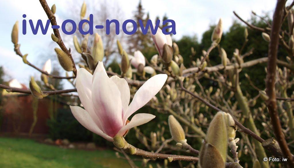 iw-od-nowa
