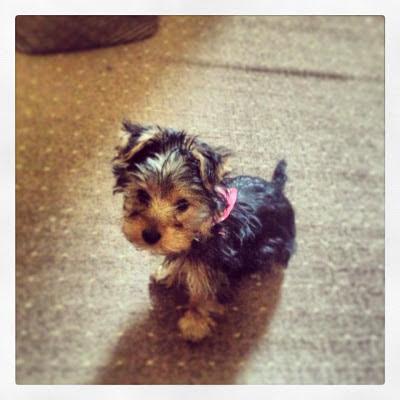 coco puppy cute