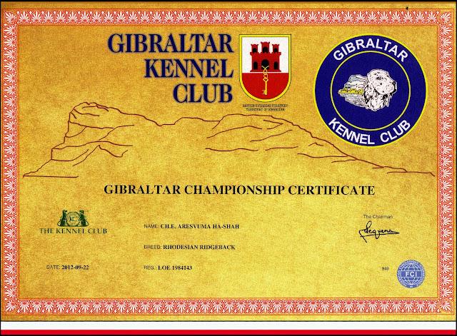 Título Campeón de Gibraltar Rhodesian Ridgeback Ch. Aresvuma Ha-Shah