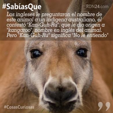 #SabíasQue El Canguro