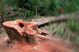 Stop killing trees