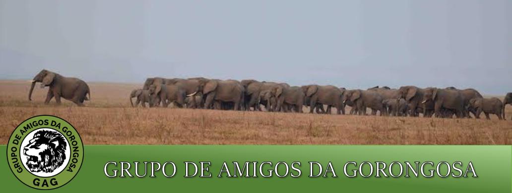 AMIGOS DA GORONGOSA