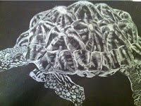 white pencil of turtle
