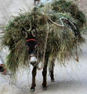 Burro (asno) llevando carga