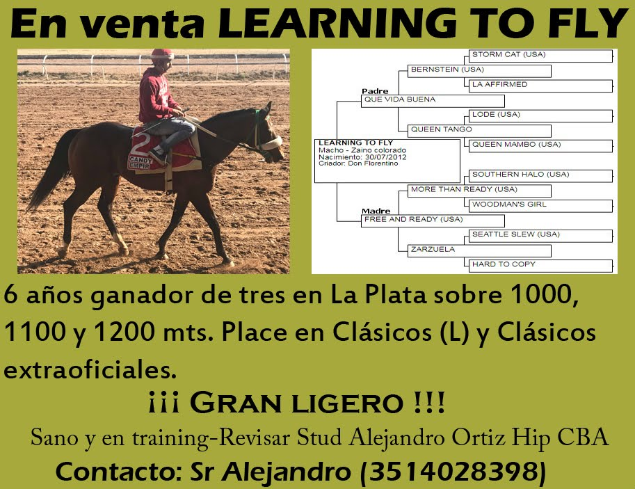 VENTA LEARNING TO FLY