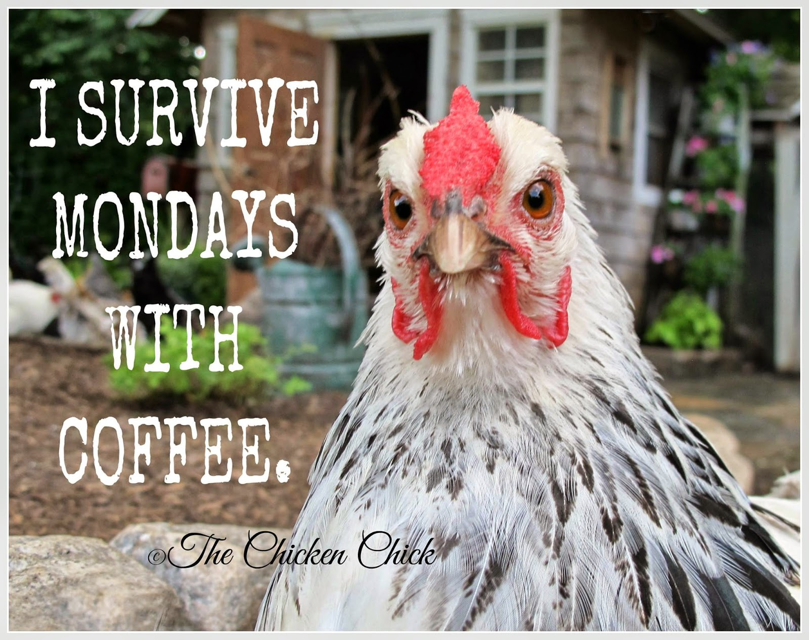 I survive Mondays with Coffee.