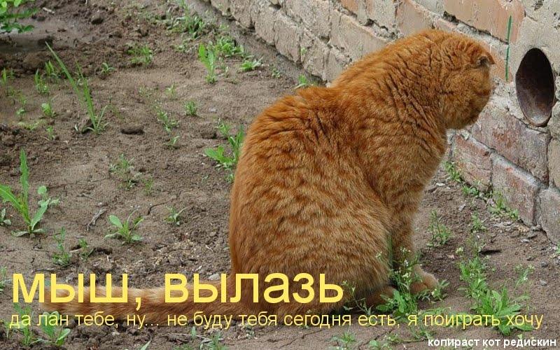 Котоматрица: мыш вылазь; да лан тебе, ну... не буду тебя сегодня есть, я поиграть хочу