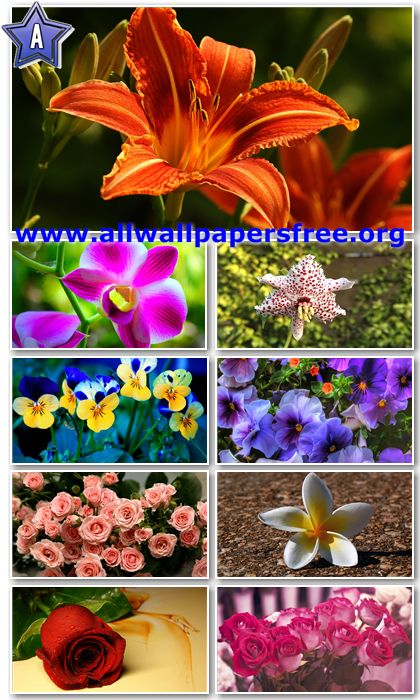30 Beautiful Flowers HD Wallpapers 1366 X 768 [Set 3]