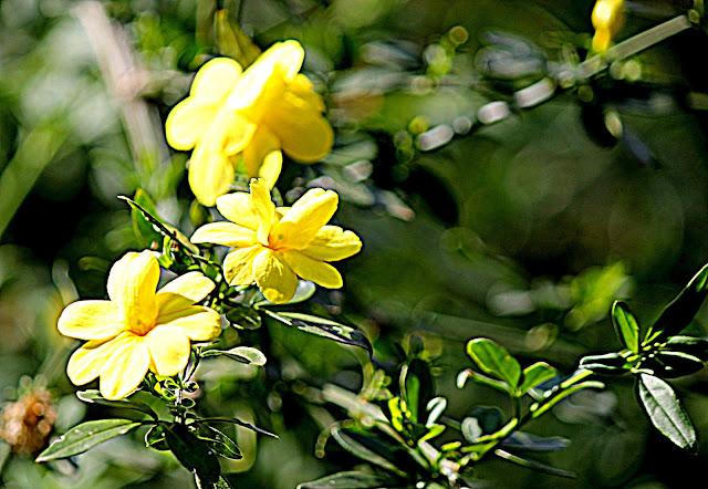 Flores amarelas em fundo verde