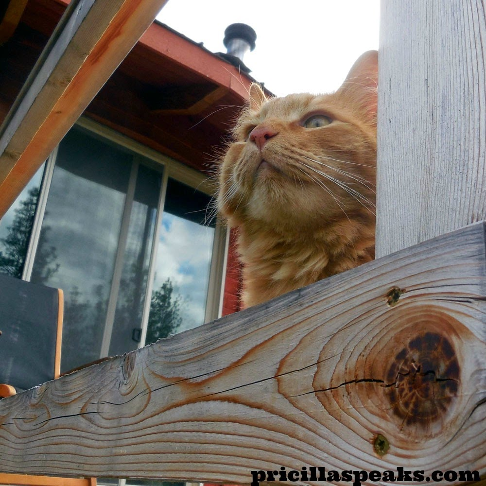 """The Maaaaa of Pricilla Sherpa Meows """"As a Farm Cat I Agree that"""