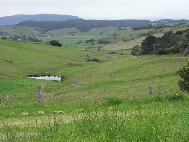 Scenery along Jamberoo Road