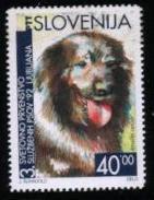1992年スロベニア共和国 スロヴェンスキー・ポインターの切手