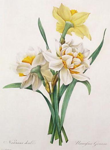 daffodils poem. (Narcissus, or Daffodil or