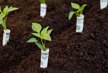 Innovacion tecnica y desarrollo sustentable que es el for Costo medio del soffitto a cassettoni