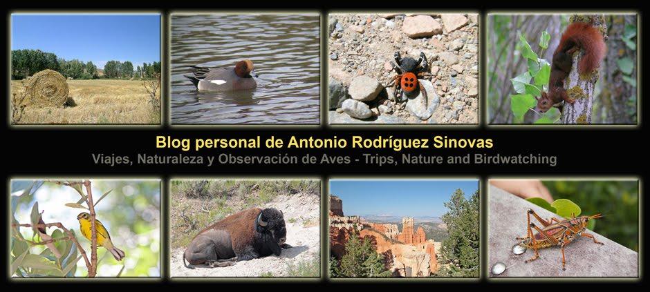 Blog personal de Antonio Rodríguez Sinovas