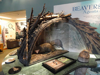 Inside a beaver lodge - photo#15