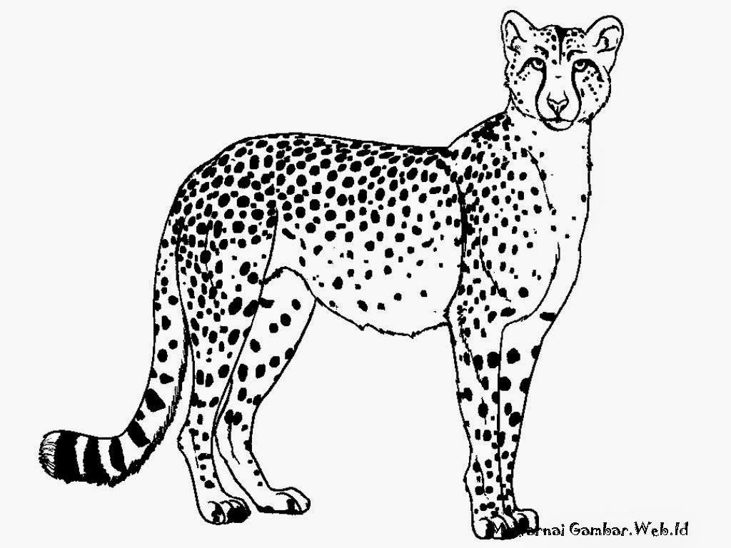 Gambar Cheetah Untuk Diwarnai Anak-Anak