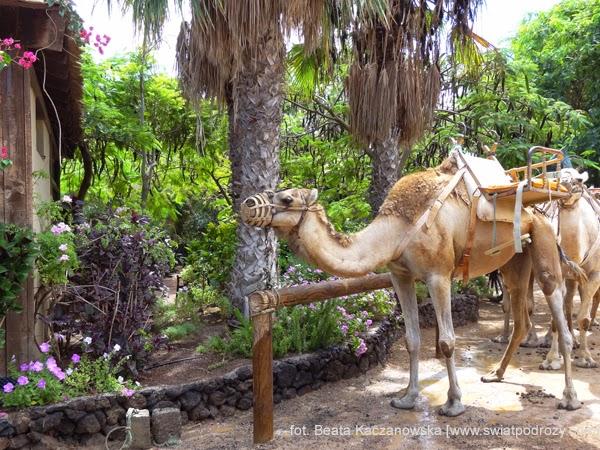 fuerteventura / oasis park