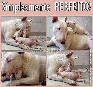 Imagens de animais para o Facebook