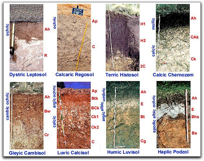 Ciencias naturales tipos de suelos - Tipos de suelos ...