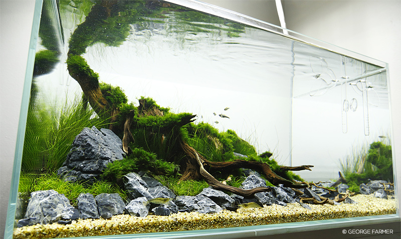 Aquascape Layout
