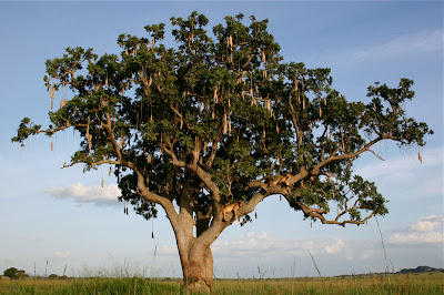 hd tree natural scene
