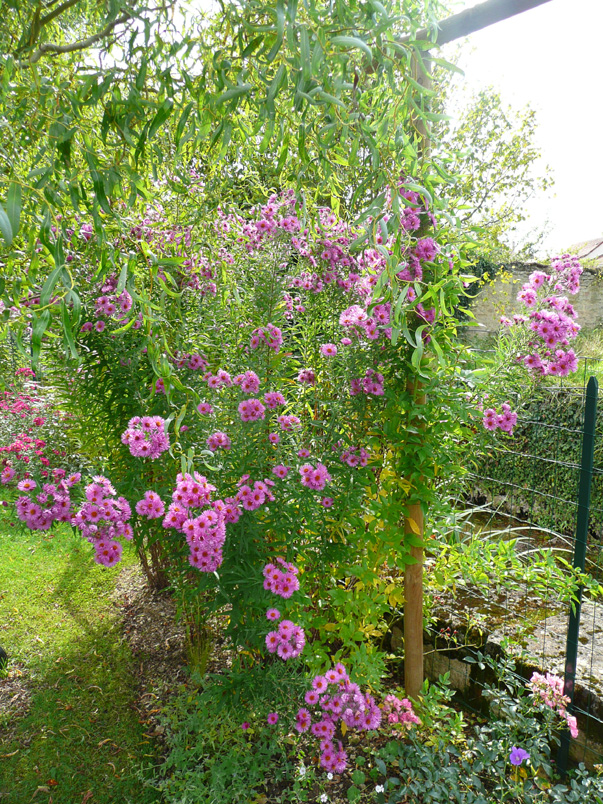 Notre jardin secret petit tour de jardin - Petit jardin plan de la tour tours ...