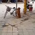 El perro que cuida la bicicleta de su dueño