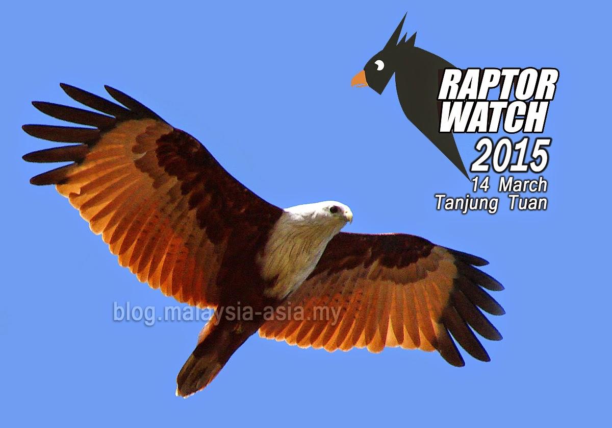 Raptor Watch 2015 Tanjung Tuan Melaka