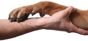 onicomicosis canina