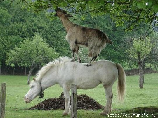 Very Funny Cooperation Of Animals
