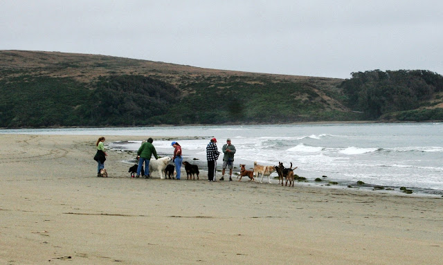 group of people in the distance by the water's edge with large group of dogs of all shapes and sizes