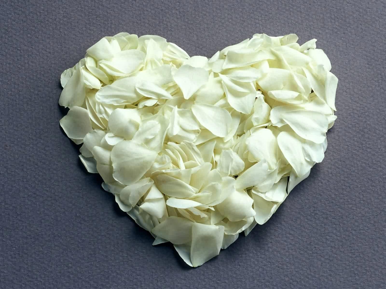 Picture world beautiful white rose beautiful white rose mightylinksfo