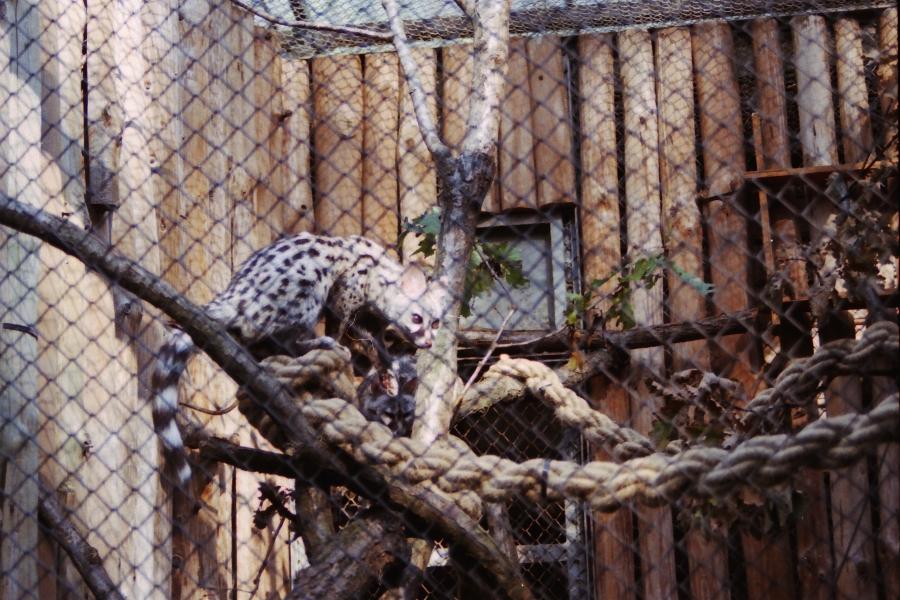 Krakow zoo (1.)