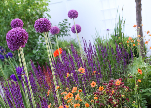 and my husband pointed out that orange and violet look pretty good together even my three year old son liked the puppies in the garden hmmm