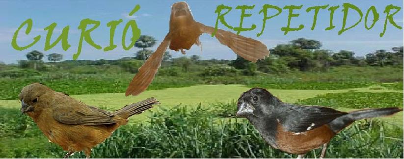 CURIÓ REPETIDOR