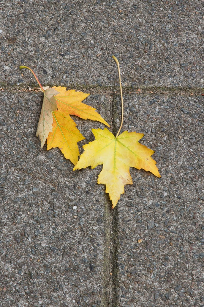 two yellow leafs