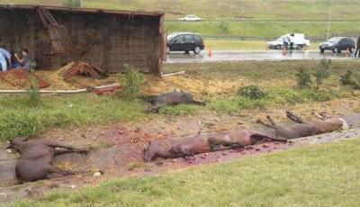 mueren caballos de Chacabuco en Córdoba