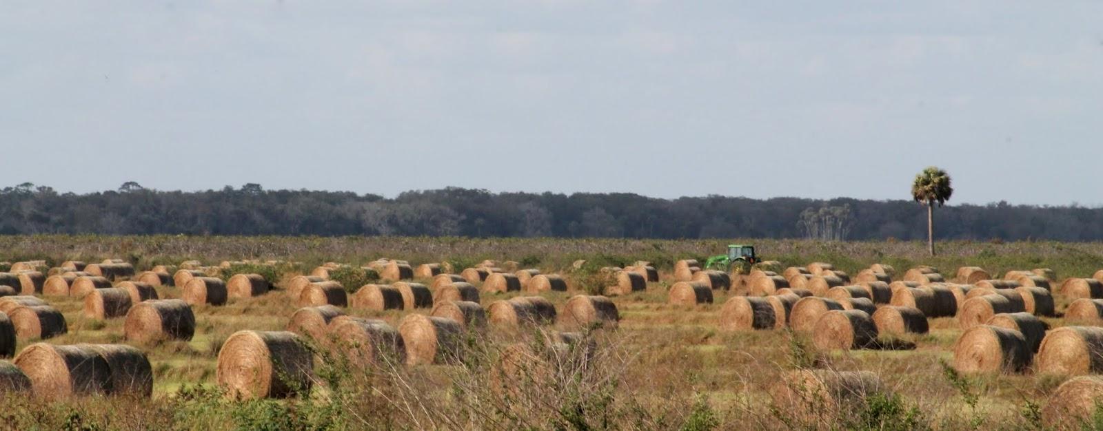 Balas de heno en los campos de Highlands County