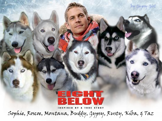 Eight below dogs names with pictures