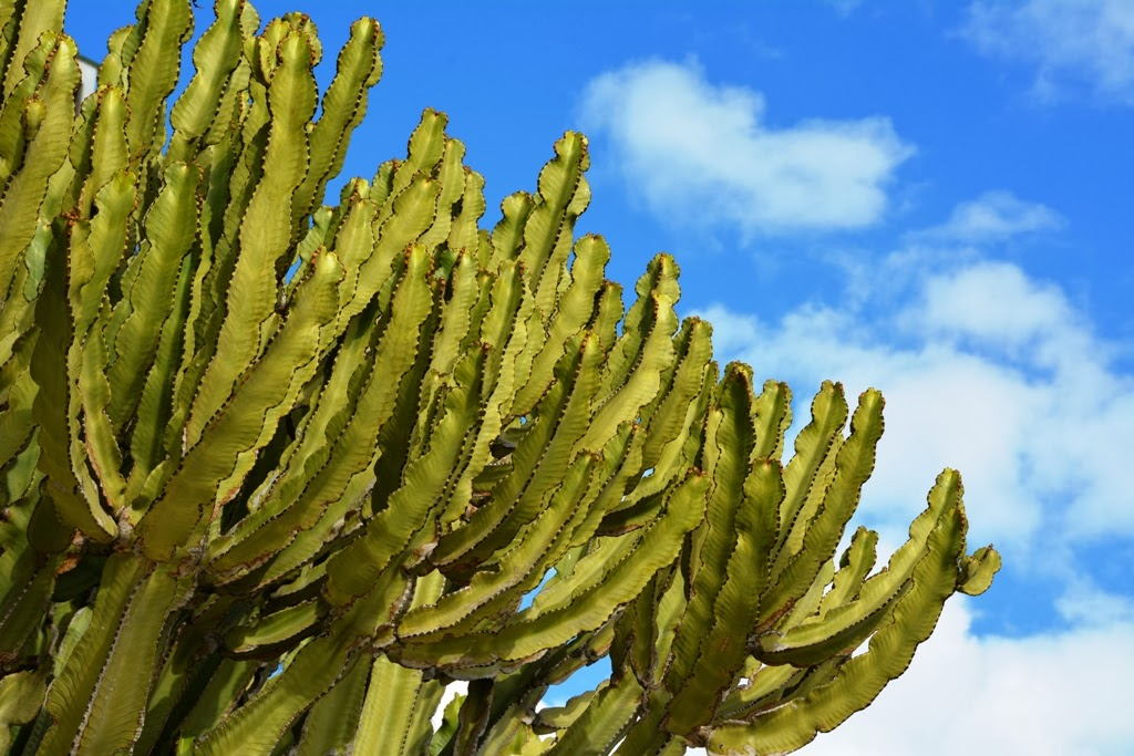 Malagueta Beach cactus