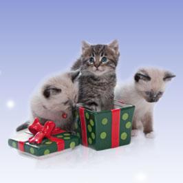 adoptar mascotas un perro o gato sin hogar