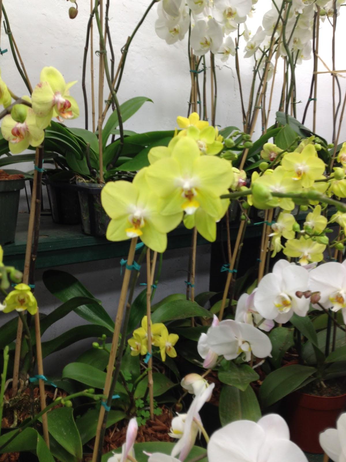 Las Vegas Flowers Premier Event Florists June 2012