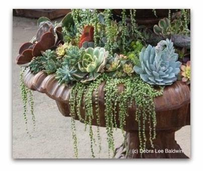 Plantas flores y velas para decorar para disfrutar for Plantas suculentas colgantes