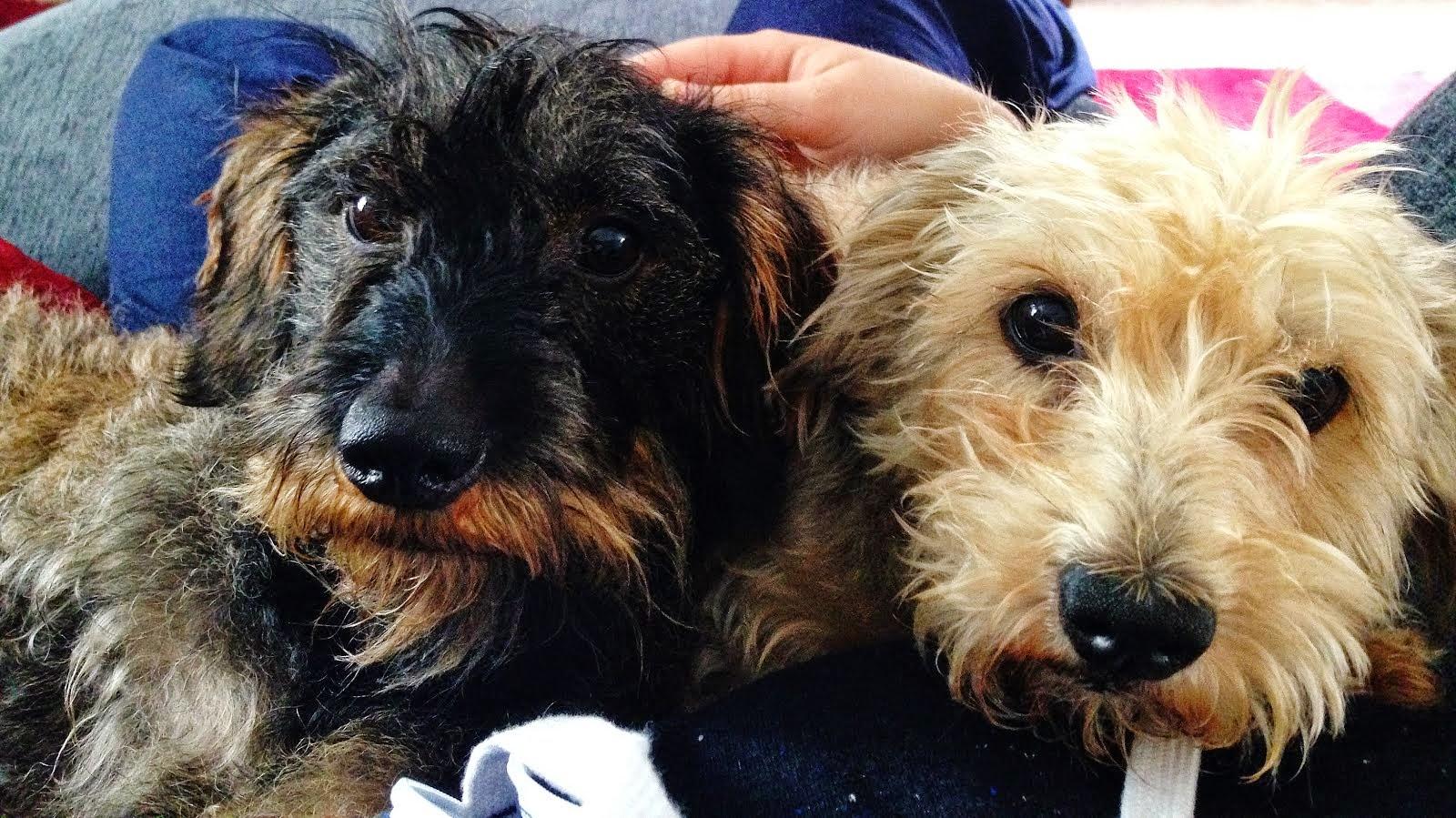 Millie & Hollie