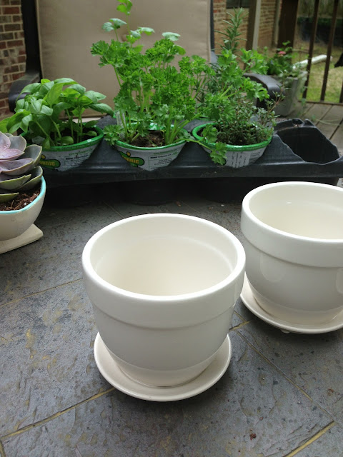 pot, herb