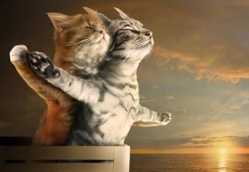 Gambar Kucing Lucu Romantis dan Imut
