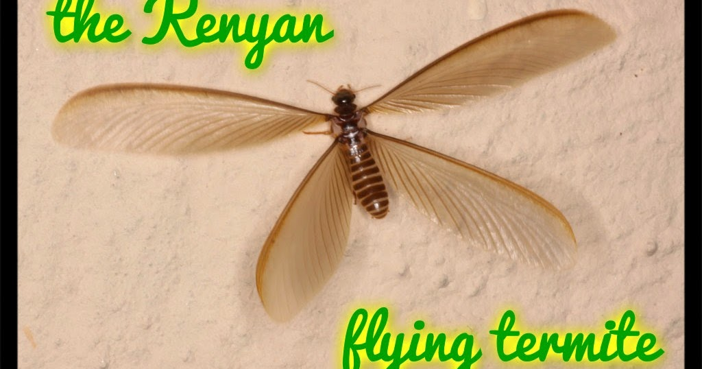16+ Termite Looking Bugs With Wings Background