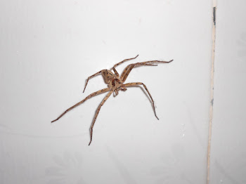 Spider in our bathroom
