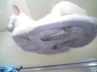 Fotografi kucing